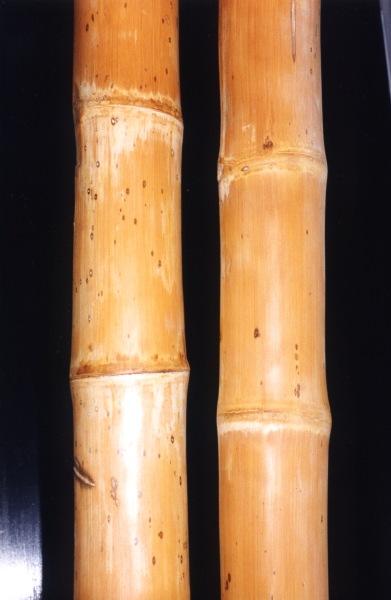 Tall Bamboo Sticks ~ Bamboo poles fencing floor mats at bamboohawaii